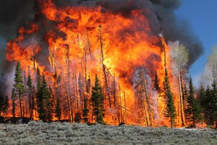 A picture of a large wildfire burning up a tree stand on a mountain.