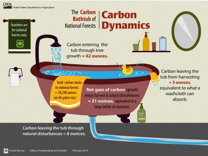 An infographic showing the Carbon Bathtub of National Forests.