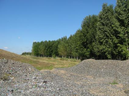 A picture showing poplars being grown for phytoremediation at a landfill in northern Wisconsin.