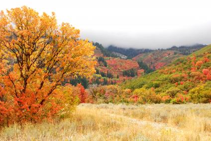 Falls Colors in Wheeler Canyon. Ogden, Ranger District, Uinta-Wasatch-Cache National Forest. (Forest Service Photo by Scott Bell)