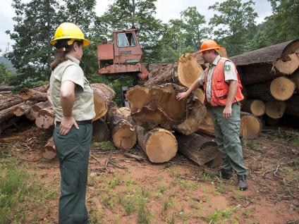 Two uniformed Forest Service employees reviewing a log deck on a logging operation.