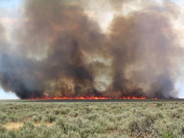A wildfire burns through a Wyoming big sagebrush ecosystem with a cheatgrass understory. Invasive annual grasses like cheatgrass are among the primary issues in the western part of the sagebrush landscape.