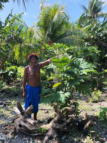 Man standing next to and pointing at a breadfruit tree