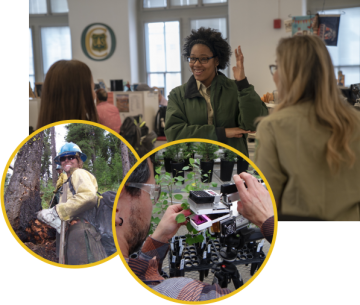 A graphic that shows several Forest Service employees in the office, another outside near a tree and another employee inspecting seedlings.