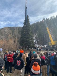 A picture of a 60-foot spruce from Carson National Forest with several people watching the tree being lifted up by a crane.