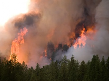 Tree torching seen from the Little Queens Fire on the Boise National Forest in August 2013.