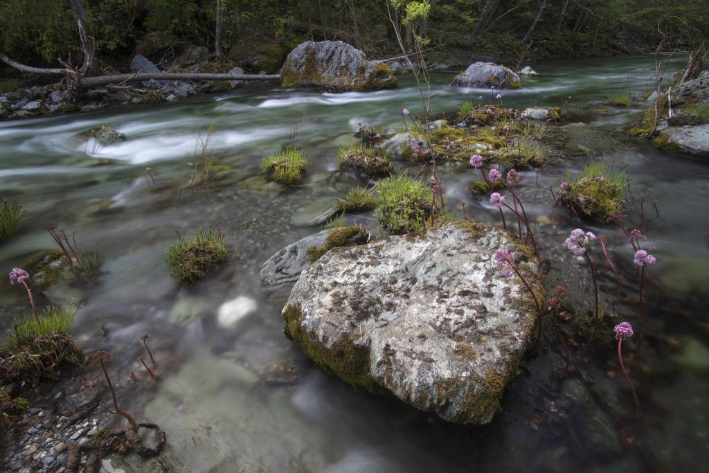 South Fork of the Trinity River, Trinity County, May 6, 2018. Photo courtesy of Martin Swett.