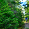 A photo of A mountain biker rides through a thick forest in the Haskill Basin