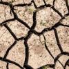A closeup photo of a mudcrack
