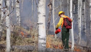 Fire fighter setting fire in a forest.