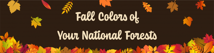 Fall Colors of Your National Forests