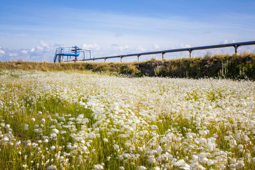A field of wildflowers with a pipeline traversing it.