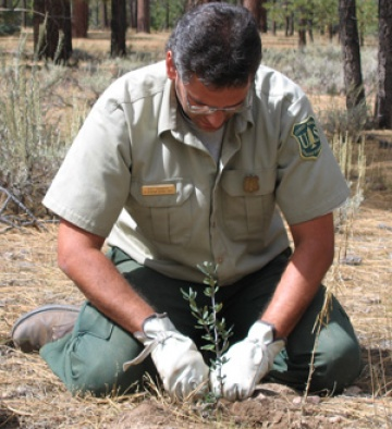 A photo of a Forest Service employee planting a sapling