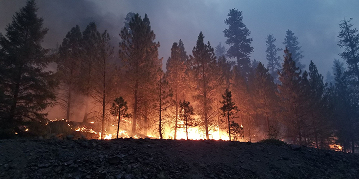A picture of several trees with a fire burning behind them on a mountain ridge.