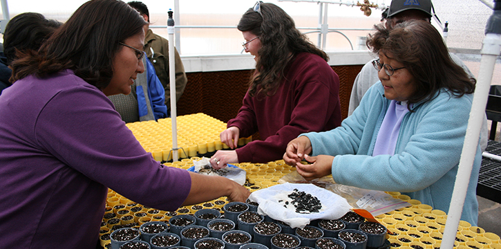 A picture of teachers at Moencopi Day School sowing yucca seeds during a nursery workshop.